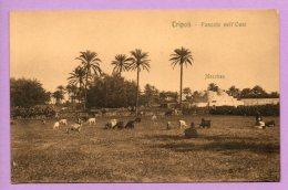 Tripoli - Pascolo Nell'Oasi - Libye
