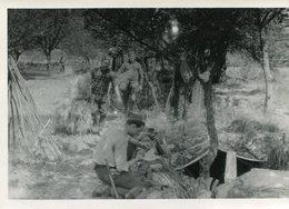 PHoto De Soldats En Travaux Bois Paille Arbres Tranchée - War, Military