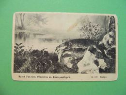 EKATERINBURG 1910x Museum Exhibition.Otter. Russian Postcard - Russie