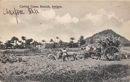 Antilles  .Antigua      Carting Canes Bendals    (voir Scan) - Antigua & Barbuda
