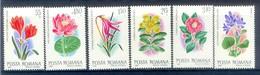 M20- Romana Romania Flowers. - Plants