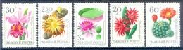 M31-  Magyar Hungrey Flowers. - Plants