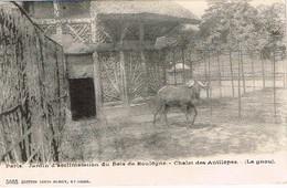 CPA - Paris - Jardin D' Acclimatation Du Bois De Boulogne - Chalet Des Antilopes - Le Gnou - Parcs, Jardins