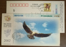 China 2002 Rare Wildlife Animal Postal Stationery Card Common Black-headed Gull - Gabbiani