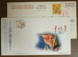 Spring Emissary Ruddy Kingfisher Bird,China 2000 New Millennium Advertising Pre-stamped Card - Birds
