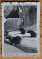 Zoo De Vincennes - Ours à Collier - 11 Octobre 1956 - 8,5 X 6 Cm - Papier Velox  - (n°13185) - Places