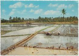 Indonesia, Sawah Mendjelang Penanaman, Rice-fields Ready For Planting,  Unused Postcard [21862] - Indonesia