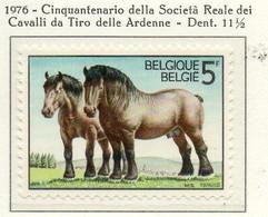 PIA - BELG - 1976 : Cinquantenario Della Società Reale Dei Cavalli Da Tiro Delle Ardenne - (Yv  1805) - Cavalli