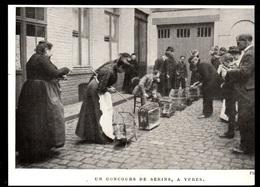 1911  --  BELGIQUE  UN CONCOURS DE SERINS A YPRES   3P837 - Old Paper