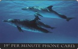 *U.S.A.* -  Scheda Usata - Dolphins