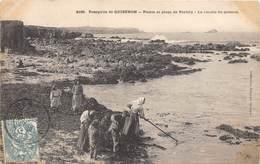 56-QUIBERON-PRESQU'ILE- POINTE ET PLAGE DE PORTIVY- LA RECOLTE DU GOËMON - Quiberon