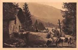 """08563 """"(AO) CHAMPOLUC - VALLE D'AYAS M. 1370 - ANGOLO SOLITARIO."""" ANIMATA, MUCCHE,FOTO G. RATTI. CART NON SPED - Italia"""