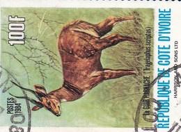 Cote D'Ivoire YV 667 O 1983 Gazelle - Gibier