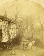 France Scene A La Campagne Brouette Ancienne Photo Stereo Papier Sale? 1860 - Stereoscopic