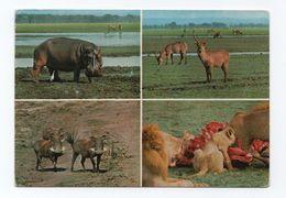 1960ys PC AFRICA MOZAMBIQUE GORONGOSA PARK WILD LIFE LIONS HIPPOPOTAMUS BOARS - Mozambique