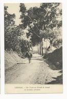 Sardoal * Um Trecho Da Estrada Do Ramal - Santarem