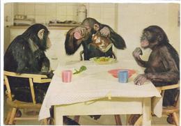 Frankfurt - Zoologischer GArten - Schimpansenkinder Bei Der Mahlzeit   -  10474 - Affen