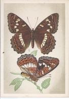 Schmetterling Großer Eisvogel   AK - 10563 - Butterflies