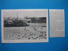 (1905) Région De Nancy Et Alsace-Lorraine : La Cueillette Des CHAPEAUX DE PANAMA - Alte Papiere