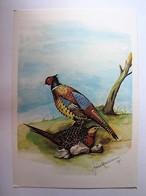ANIMAUX - OISEAUX - Couple De Faisans - Oiseaux