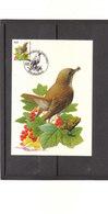 Carte Buzin - 3264 Rossignol Philomèle - 1985-.. Vögel (Buzin)
