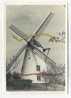 Nil-Saint-Vincent-St-Martin : Le Moulin De Tiège     : Groot Formaat 15 X 10.5 Cm  :  Windmolen - België