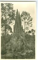 CP. Termitière Photogr. Zagourski 1935? L'Afrique Qui Disparait 182 - Cartes Postales