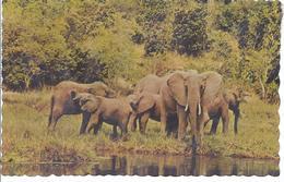Ostafrika - Elefantenherde An Der Tränke .  -  AK - 10608 - Éléphants