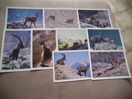 LOT DE 9 CARTES FAUNE DE MONTAGNE ...BOUQUETIN...CHAMOIS - Cartes Postales