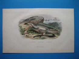 (1901) Planche : Le Brochet  -  La Perche  -  L' Anguille - Collections