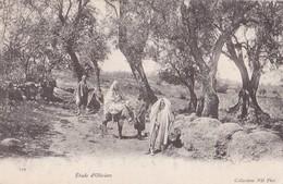 ETUDE D'OLIVIERS - Algeria