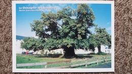 CPM ARBRE LE CHATAIGNIER DE L ERAUDIERE A NANTES 44  ARBRES REMARQUABLES ASSOCIATION PROTECTION ARBRES - Trees
