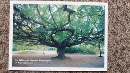 CPM ARBRE LE HETRE DU JARDIN BOTANIQUE DE BAYEUX CALVADOS 14   ARBRES REMARQUABLES ASSOCIATION PROTECTION ARBRES - Trees