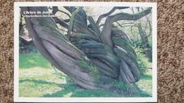 CPM ARBRE L ARBRE DE JUDEE DE L HAY LES ROSES VAL DE MARNE 94  ARBRES REMARQUABLES ASSOCIATION PROTECTION ARBRES - Trees