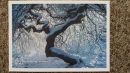 CPM ARBRE LES FAUX DE VERZY EN HIVER MARNE 51  ARBRES REMARQUABLES ASSOCIATION PROTECTION ARBRES - Trees