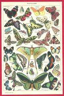 Papillons, Papillon, Illustration Adolphe Millot, Larousse 1908 - Autres