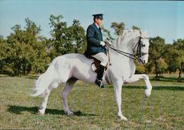 4740A    CHEVAL    VIERGE   VERSO - Paarden