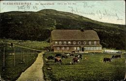 Cp Špindlerův Mlýn Spindlermühle Riesengebirge Reg. Königsgrätz, Špindlerova Bouda, Spindlerbaude - Schlesien