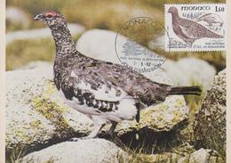 Carte  Maximum  1er  Jour   MONACO  Oiseau  Du  Parc  Du  Mercantour  :  LAGOPEDE  DES  ALPES   1982 - Perdiz Pardilla & Colín