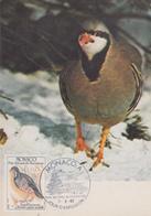 Carte  Maximum  1er  Jour   MONACO  Oiseau  Du  Parc  Du  Mercantour  :  Perdrix  Bartavelle  1982 - Perdiz Pardilla & Colín