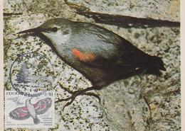 Carte  Maximum  1er  Jour   MONACO  Oiseau  Du  Parc  Du  Mercantour  :  Tichodrome  Echelette  1982 - Pájaros Cantores (Passeri)
