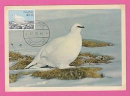 Carte Maximum - Oiseaux - Islande - Lagopède - (1965) - Oiseaux
