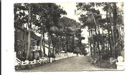 QUIMIAC En MESQUER - Avenue Dans Les Bois - Villas - 1950 - Mesquer Quimiac