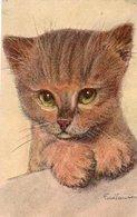 88Sv  Illustrateur Fredsauter Chat Chaton N°2 - Altre Illustrazioni