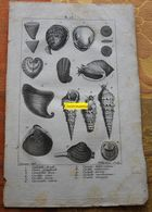 Coquillages : Planche Du Nouveau Dictionnaire D'histoire Naturelle - 1803 - Stampe & Incisioni