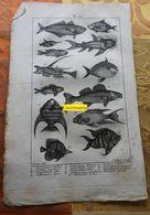 Poissons Tropicaux : Planche Du Nouveau Dictionnaire D'histoire Naturelle - 1803 - Estampes & Gravures