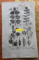 Plantes Dont Caprier : Planche Du Nouveau Dictionnaire D'histoire Naturelle - 1803 - Stampe & Incisioni