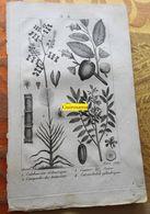 Plantes Dont Canne à Sucre : Planche Du Nouveau Dictionnaire D'histoire Naturelle - 1803 - Estampes & Gravures