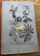 Plantes Dont Calebassier : Planche Du Nouveau Dictionnaire D'histoire Naturelle - 1803 - Stampe & Incisioni