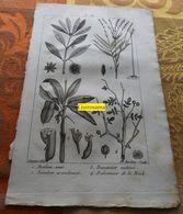 Plantes Dont Anis : Planche Du Nouveau Dictionnaire D'histoire Naturelle - 1803 - Stampe & Incisioni